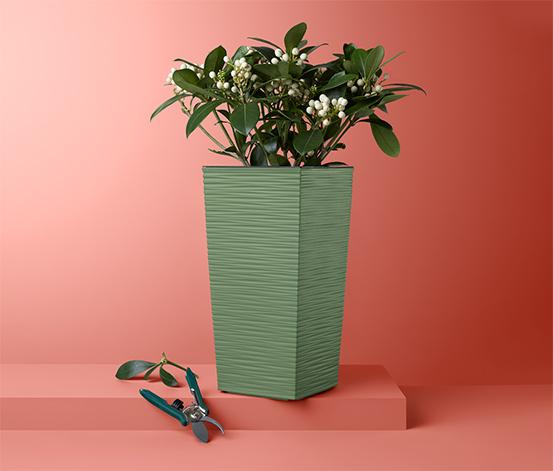 Stĺpik na rastliny, hranatý