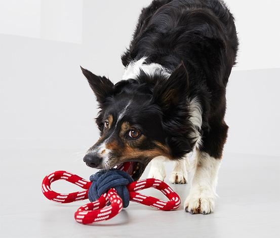 Hračka pre psy