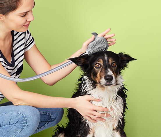 Sprcha pre psy