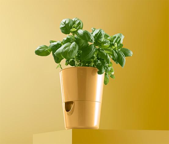 Kvetináč na bylinky so zavlažovacím systémom