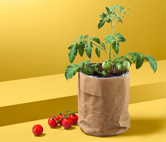 Semená rajčín v papierovom vrecku