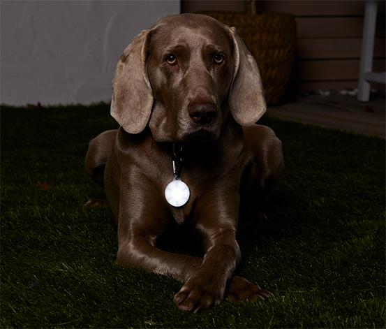 Prívesok s LED na obojok pre psy